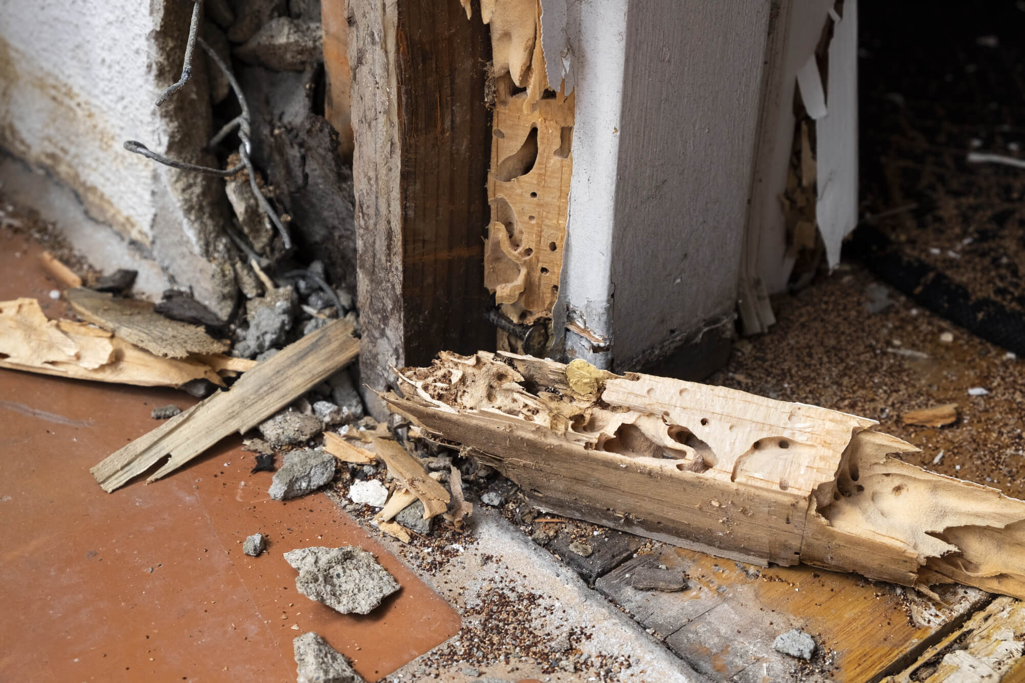 Termite Removal The Key Things You Need2 To Know