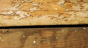 Termite Damage This Is How They Can Ruin Your Home1